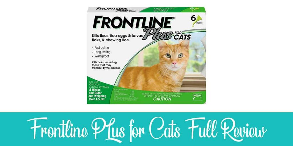 Frontline Plus for Cats Review
